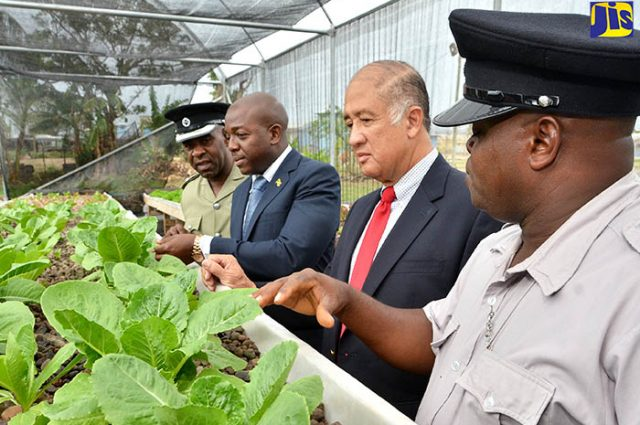 Officials inspecting cabbage for the greenhouse project